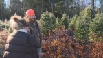 New Brunswick Christmas tree growers enjoying growing demand for real trees