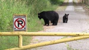 Road to Metro Vancouver park closed because of bears