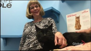The cat came back: Missing Peterborough feline returns 69 days later.