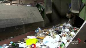 Toronto recycling: Contamination in blue bins on the rise