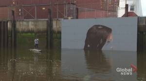 Well-known artist 'Hula' painting mural on Saint John sea wall for a second time