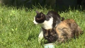 The feral cat problem in Bath, ON