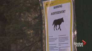 Wolf warning issued for Banff National Park