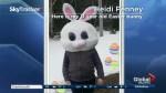 Easter bunnies on Global News Morning