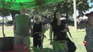 Nanaimo opioid victim memorial