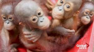 Scientists warn an 'unprecedented' one million species at risk of extinction
