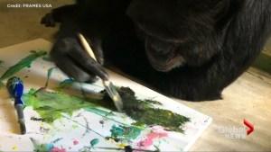 Miami art show features Michael Jackson's pet chimpanzee Bubbles' masterpieces