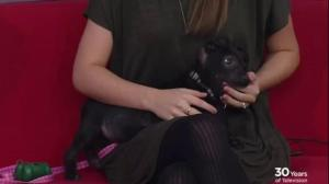 Adopt a Pet: Bugsy needs a home