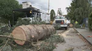 B.C. power outages from severe weather triple since 2013