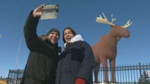 Norway and Saskatchewan officially declare truce to end moose war