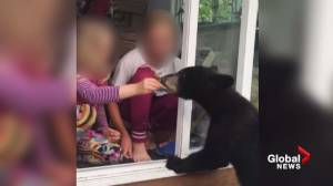 Video captures B.C. family hand-feeding black bears