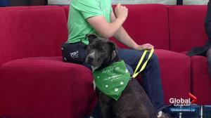 Calgary Humane Society Pet of the Week: Nhala
