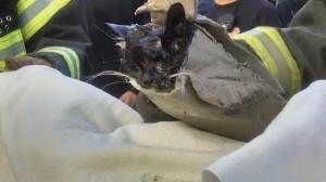Kitten rescued from dumpster drain hole