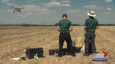 Drones under testing in Alberta as possible tree seeders