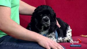 Calgary Humane Society Pet of the Week: Tiah
