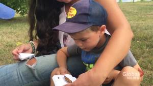Butterflies released on Armour Hill in Peterborough honour lives lost