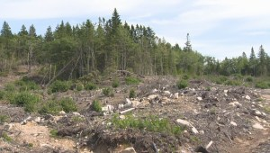Nova Scotia says no timeline for decision on forestry review