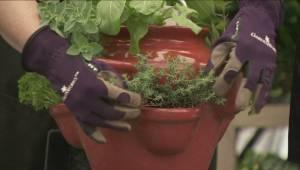 Gardenworks: Gardening gifts for Mom (04:50)