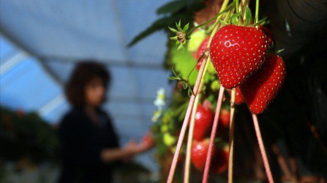 The Dirty Dozen and Clean Fifteen: 2016's list of fruits, vegetables with the most pesticides