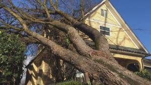Tree crashes through bedroom of East Vancouver home