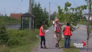 Halifax government teams with Dalhousie University to study urban forest