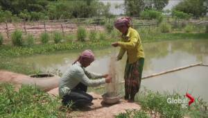 B.C. expertise helps feed struggling population in Cambodia