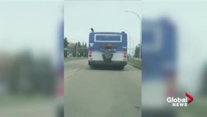 Video shows person clinging to back of moving Edmonton transit bus