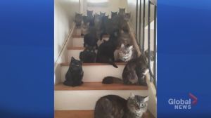 More than 100 cats removed from Toronto home