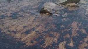 California oil spill threatening ocean wildlife