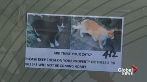 Threatening cat poster upsets southeast Calgary neighbourhood