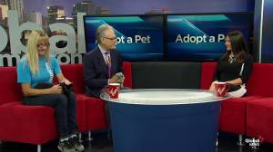 Edmonton Humane Society: Subeme and Flipper