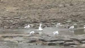 Smiths Falls town council bans feeding wildlife