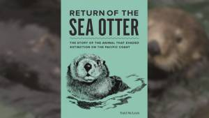 How the endangered sea otter population made a comeback