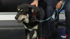 Edmonton Humane Society: Ortega & Beatrice