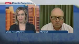China targets Canadian canola