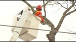 Storm damage cleanup continues in Peterborough