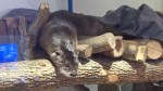 Aquatarium in Brockville celebrates Otter pups first birthday