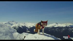 'Superpower Dogs' showing in IMAX at Telus World of Science.