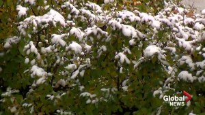 Lethbridge hit with snowy fall day Tuesday