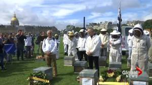 French beekeepers stage funeral for dying bee population