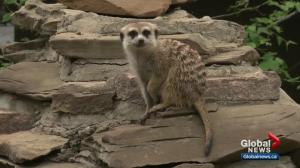 Our YEG At Night: ZooFest preview