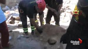 Dog pulled alive from the rubble more than a week after the earthquake in central Italy