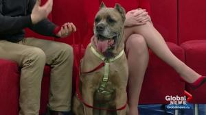 Pet of the Week: Brooklyn