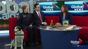 Previewing Law Day in Calgary