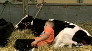 Junior Ag show takes over Prairieland Park