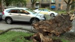Wind storm packs a punch in NDG