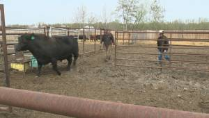 Earls' decision on beef leads to backlash in Alberta