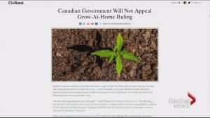 Saint John Media Company draws interest from New York for marijuana website (02:08)