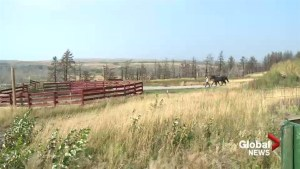 Rocking Heart Ranch continues rebuild after Kenow Fire