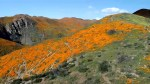 'Super Bloom' in California causes public safety emergency